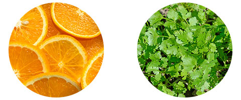 コリアンダーとスイートオレンジ由来のスリミング成分