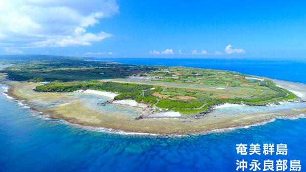 島桑-沖永良部島